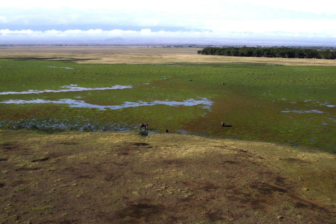 Elephants in Tsavo National Park Kenya