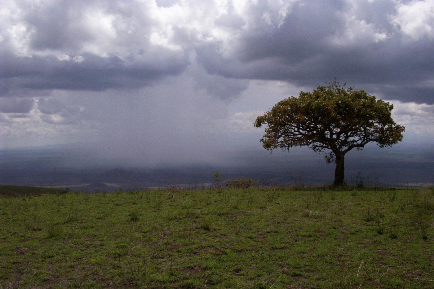 Tsavo National Park Kenya