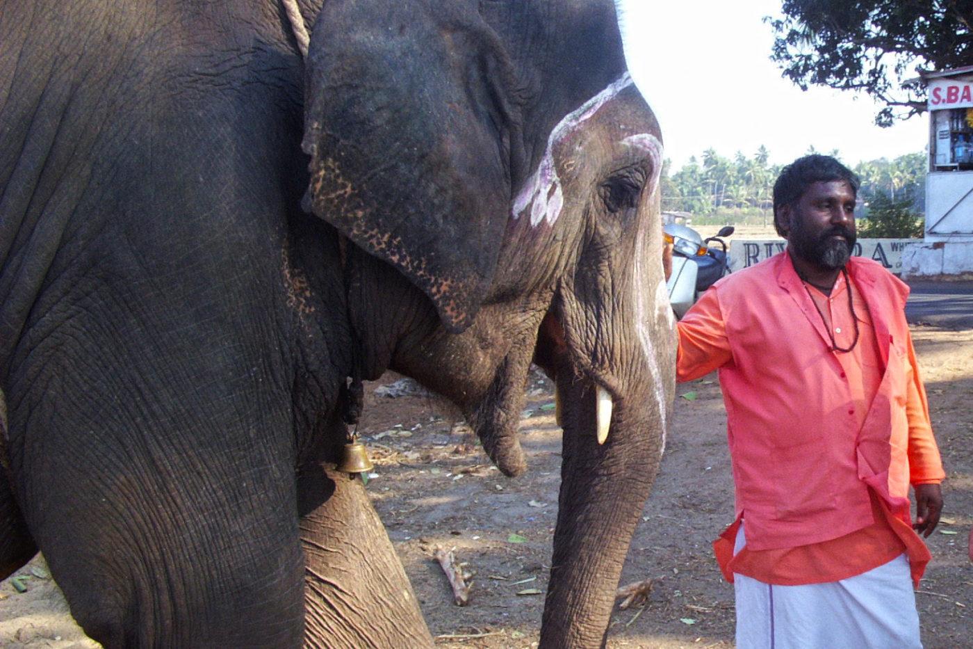 Elefante Goa India