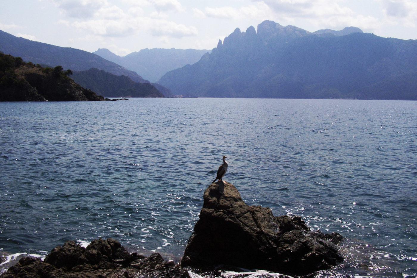Corsica Golfo di Porto