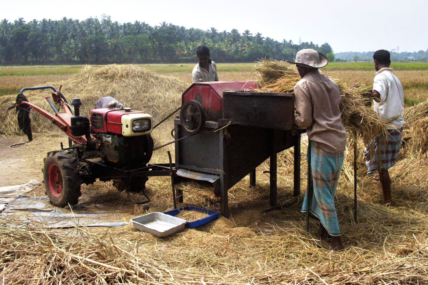 Sri Lanka coltivatori di riso