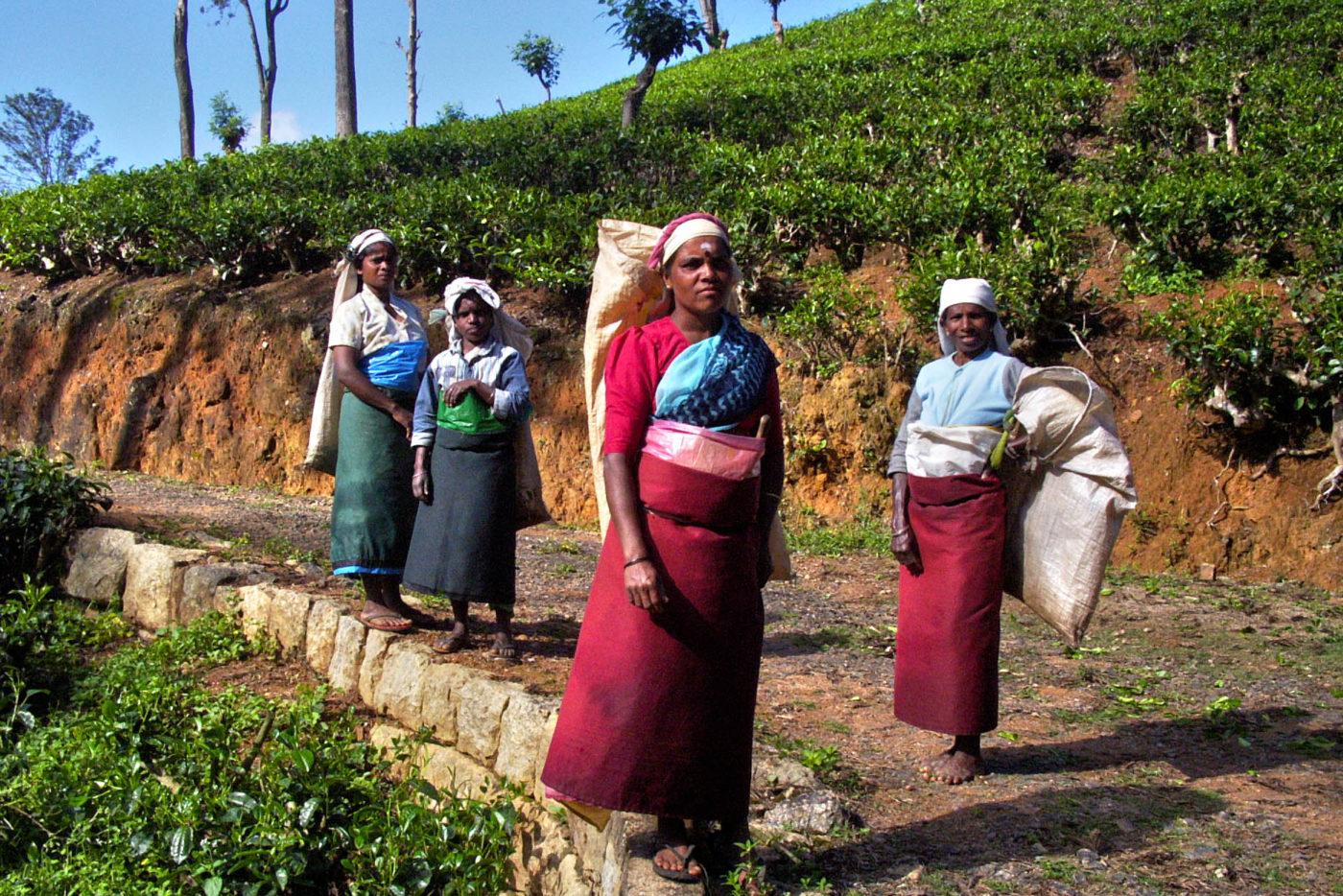 Sri Lanka Nuwara Eliya coltivatori di tè