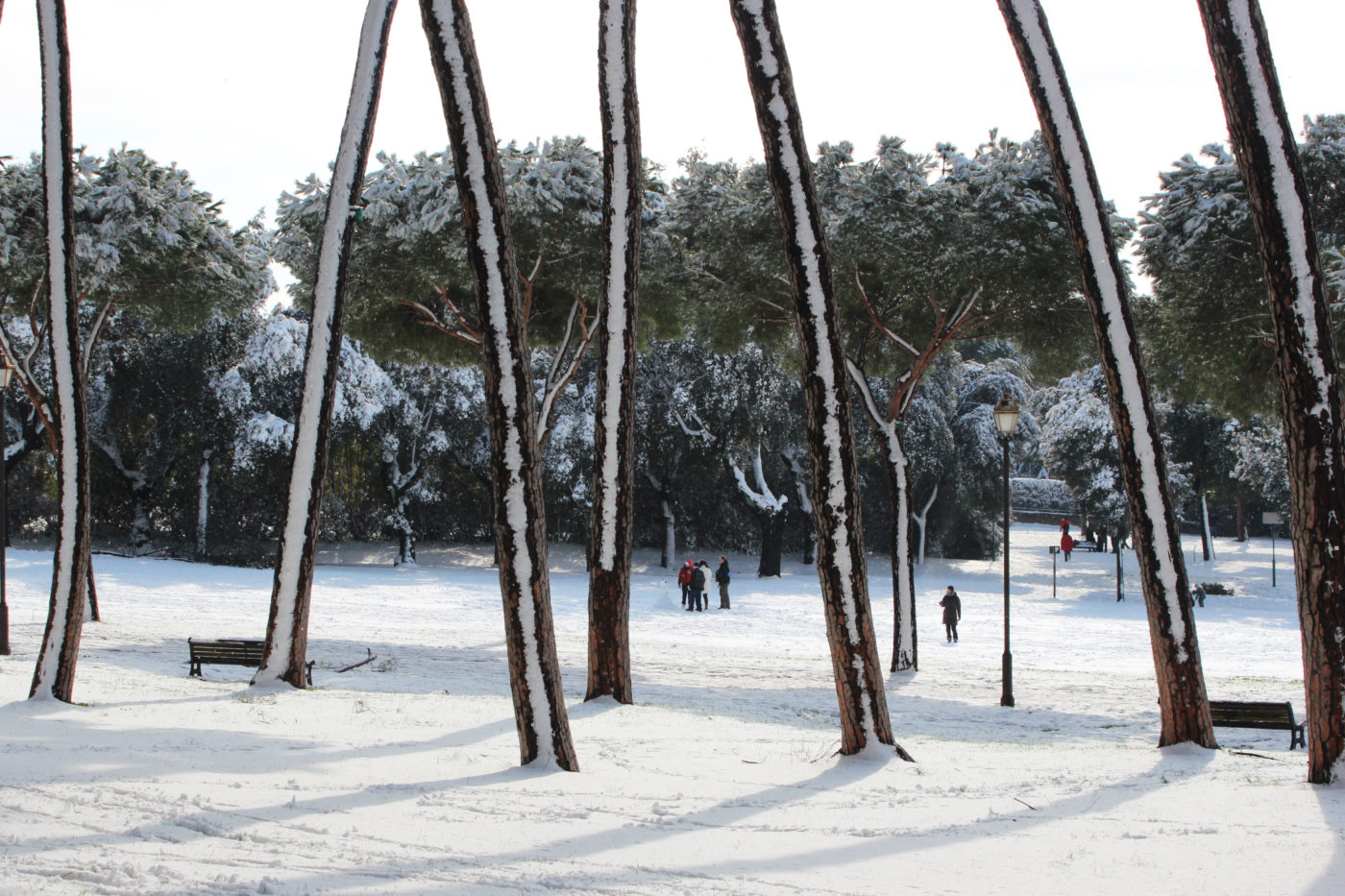 Villa Pamphili con la neve 2012