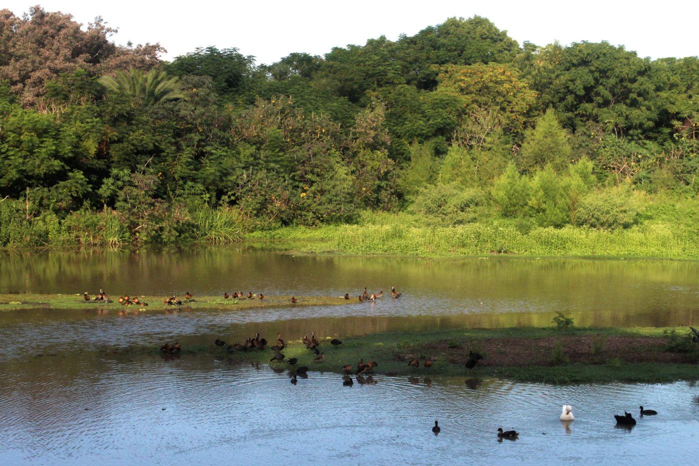 Buenos Aires Argentina Reserva Ecológica Costanera Sur
