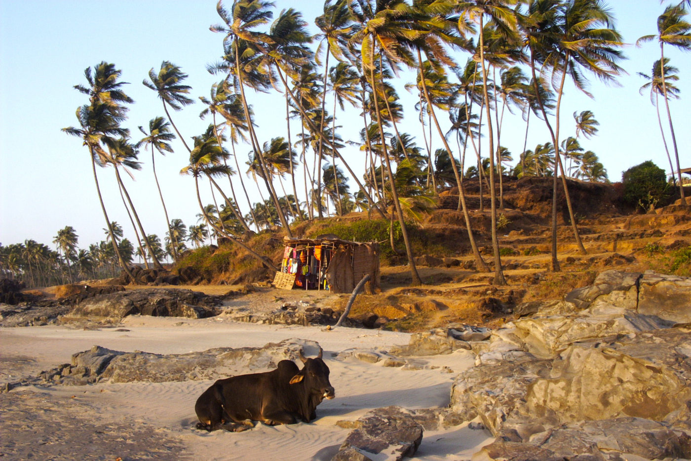 Vacca Sacra Goa, India